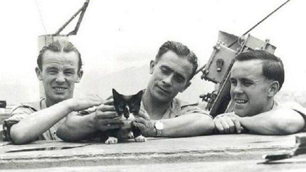 Непотопляемый Сэм. История кота-мореплавателя